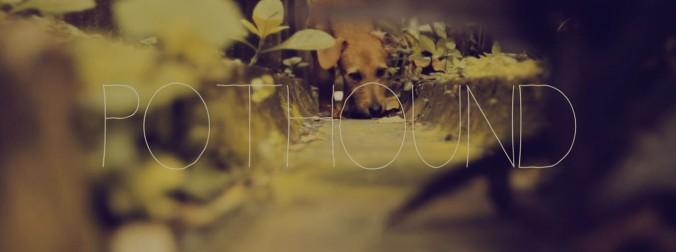 pothound-hunde-und-rechtschaffenheit