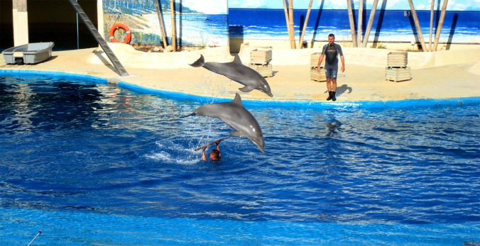 delfines 2