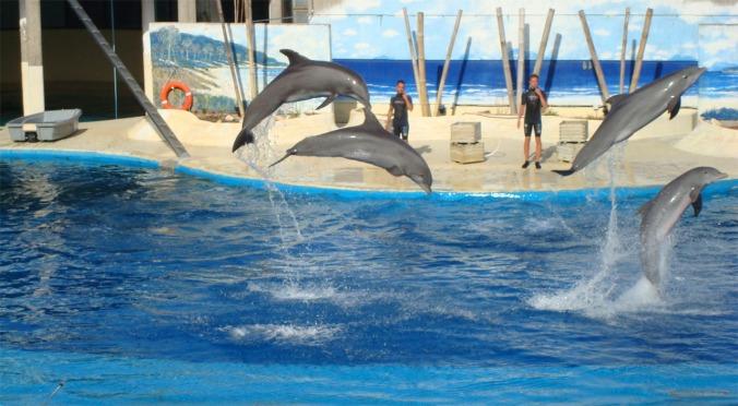 delfines 5